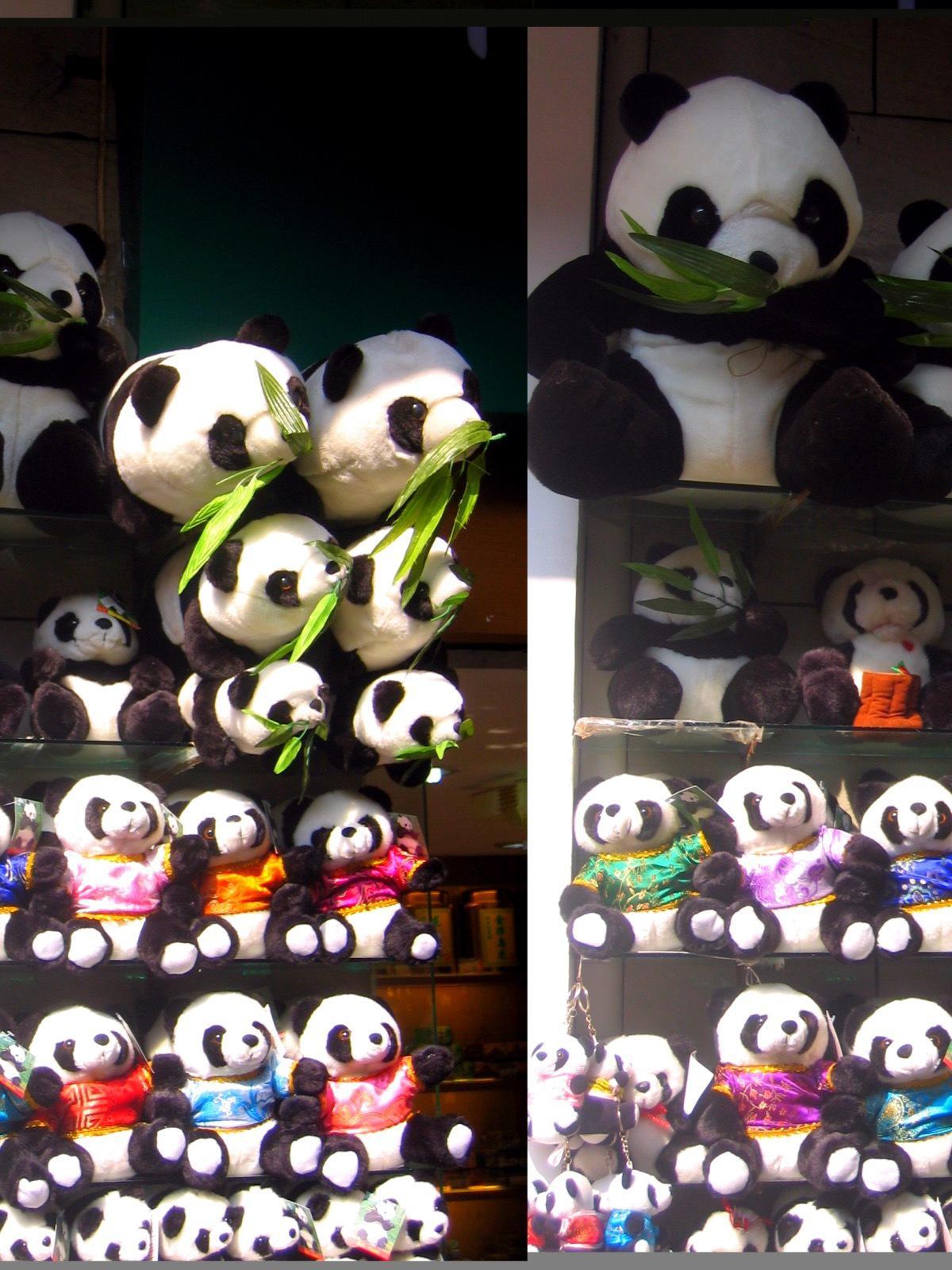 Shanghai - Panda Bears