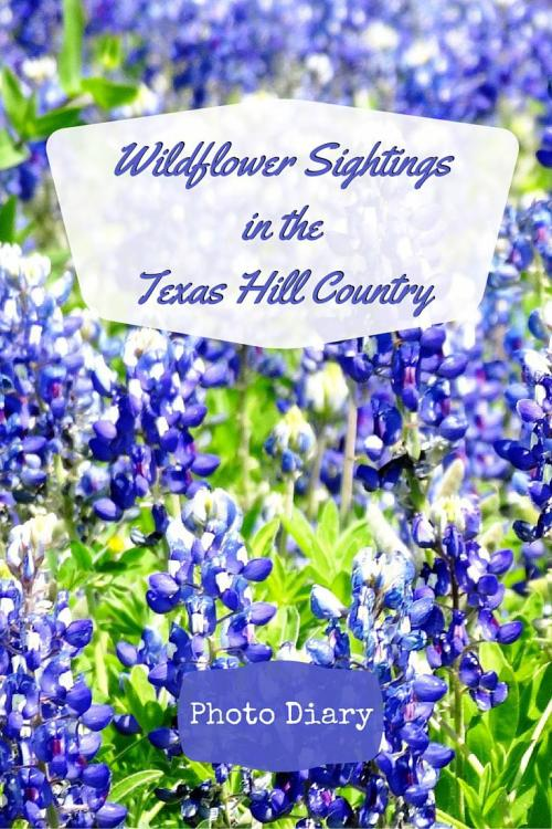 Wildflower Sightings in the Texas Hill Country