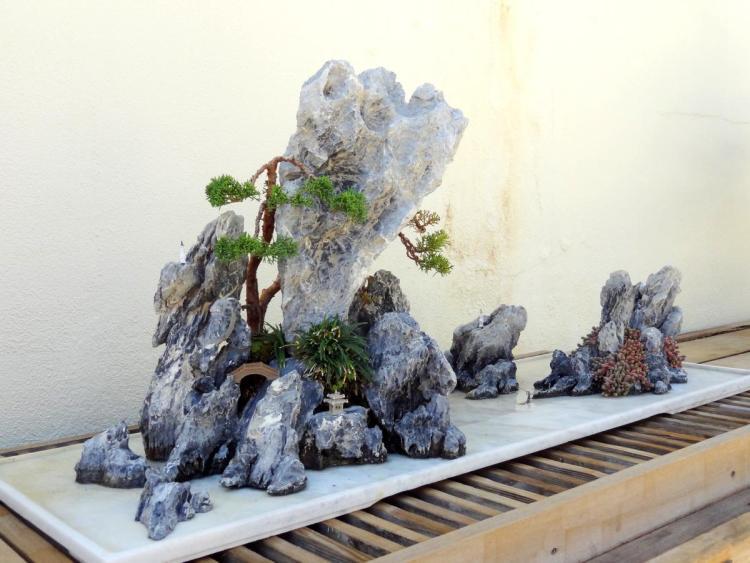 Arboretum in Washington DC Bonsai Exhibit